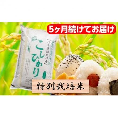 特別栽培米★[定期便] 5カ月★毎月 精米10kg または玄米11kg【コシヒカリ】