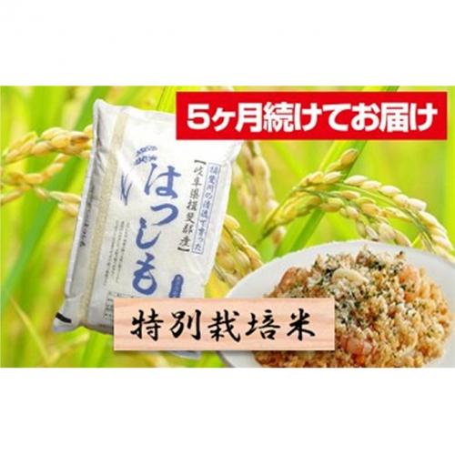 特別栽培米★[定期便] 5カ月★毎月 精米10kg または玄米11kg【ハツシモ】