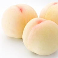 【ご家庭用】岡山県産 おかやま夢白桃 約2kg(6~7玉)