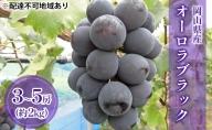 ●先行予約受付●岡山県産 オーロラブラック(種無し)約2kg(3~5房)