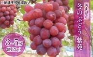 ●先行予約受付品●岡山県産 冬のぶどう 紫苑(種無し)約2kg(3~5房)
