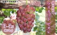 ●先行予約受付●岡山県産 皮ごと食べられる マスカット ビオレ 約2kg(3~5房)