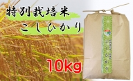 【特別栽培米 炭壌米 こしひかり】令和2年産 白米 10kg 『先行予約』