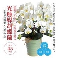 綺麗で丈夫な三河陶器で贈る 光触媒胡蝶蘭(モエギの陶器×白色の花) H100-002
