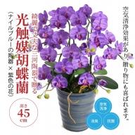 綺麗で丈夫な三河陶器で贈る 光触媒胡蝶蘭小輪3本立(ナイルブルーの陶器×紫色の花) H100-031
