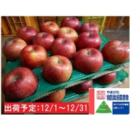 12月 特別栽培 訳ありサンふじ約10kg 大江町産