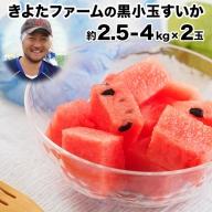 『きよたファーム』の黒小玉すいか2玉セット 1玉約2.5-4kg前後 熊本県玉名郡玉東町『きよたファーム』 すいか フルーツ 果物 熊本県産 《7月上旬-8月中旬頃より順次出荷》