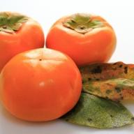 富有柿 約6kg