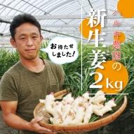 21-833.初夏だけの旬の味わい!ハルキ農園の新生姜2kg【期間限定】