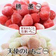 B10-132 冷凍いちご 桃薫1kg&天使のいちご500g TM