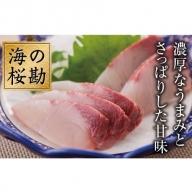 B2-0106/「海の桜勘」1尾食べつくしコース
