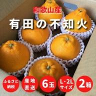 ZE6111_有田のしらぬひ 6玉 L~2Lサイズ 2箱【まごころ手選別】