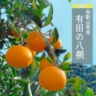 ZE6151_有田のはっさく 10kg S・Mサイズ混合【まごころ手選別】