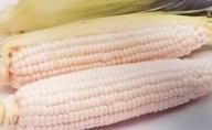 ホワイトコーン(ピュアホワイト)約2.5kg