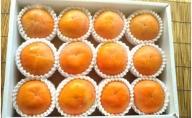 ZD6185_【厳選・産直】和歌山産の富有柿 約4kg 3L・4Lサイズ(化粧箱入り)