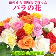 バラの花 約20本 花のまち御坊産の薔薇 生産者から新鮮直送