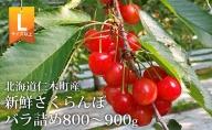<くだものの笠井園>さくらんぼ(Lサイズ以上)800g~900g