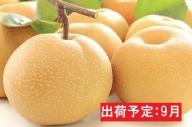 9月 蔵王の梨 大玉豊水約5kg