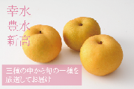 <品種おまかせ>旬の梨3kg ※2021年7月中旬から10月下旬の収穫期間内出荷【A193】