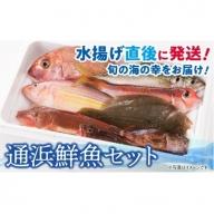 『日向灘海の幸』通浜鮮魚セット