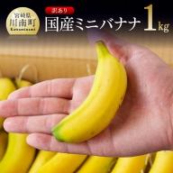 【訳あり】国産ミニバナナ1kg