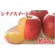 【2020年度産】シナノスイート家庭用10kg ※クレジット限定