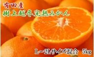 ZD6197_【濃厚・まろやか】樹上越冬完熟みかん 5kg(L~2Lサイズ混合・赤秀)