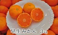 【2021年11月上旬より順次発送】秋の味覚 果汁たっぷり 早生みかん3kg