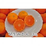 秋の味覚 果汁たっぷり 早生みかん3kg【2020年11月上旬以降お届け】