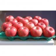 家庭用りんご10キロ