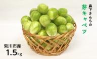 森下さんちの芽キャベツ(袋入り)【発送開始:12月下旬以降】