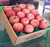 りんご 約10kg サンふじ 葉とらず 青森産【2021年1月から順次発送】