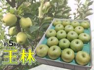 りんご 青森産 約5kg 王林 【2021年1月から順次発送】 五所川原金山地区太田農園