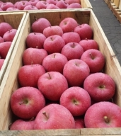 りんご 青森産 約5kg サンふじ 【2021年1月から順次発送】五所川原金山地区太田農園