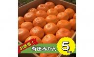 BD6009_お徳用!有田みかん たっぷり5kg!