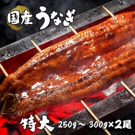 BYA5◇国産 特大 うなぎ蒲焼 2尾(真空瞬間冷凍)