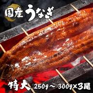 BYA6◇国産 特大 うなぎ蒲焼 3尾(真空瞬間冷凍)
