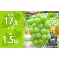 約1.5kg シャインマスカット 讃岐育ちのフルーツ ・ぶどう 旬  高級 ブドウ 人気 果物 夏