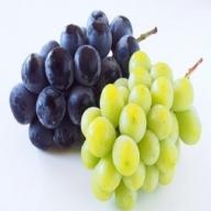 【先行予約】農園直送 完熟ブドウ詰め合わせセット(2〜3房)