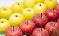 年明け サンふじ×王林 約5kg 【JA津軽みらい・平川市産・青森りんご・1月・2月】