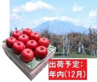 年内  サンふじりんご「特A」約3kg 糖度13度以上 平川市産(8~10玉)