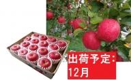りんご 青森産 約5kg サンふじ 糖度 13度以上【12月発送】最高級特選大玉
