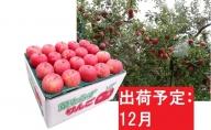 【訳あり】 りんご 約10kg サンふじ 葉とらず 青森産 【12月発送】