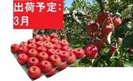 【訳あり】 りんご 約10kg サンふじ 青森産 【3月発送】