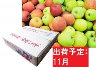 【訳あり】 りんご 青森産 約5kg 【11月発送】品種おまかせ1種