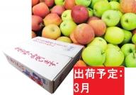 【訳あり】 りんご 青森産 約5kg 【3月発送】品種おまかせ1種