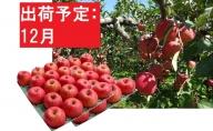 【訳あり】 りんご 約10kg サンふじ 青森産 【12月発送】