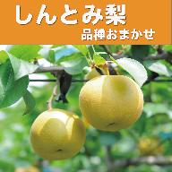 しんとみ梨(本部梨園)品種おまかせギフト※2020年7月下旬から10月までの収穫期間内出荷