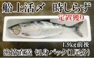 浦河前浜産 船上活〆時鮭(時しらず) 切身1尾分(1.9kg前後)<生冷>[B02-473]