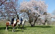 乗馬商品券90分×1枚(速歩コース)[B07-093]